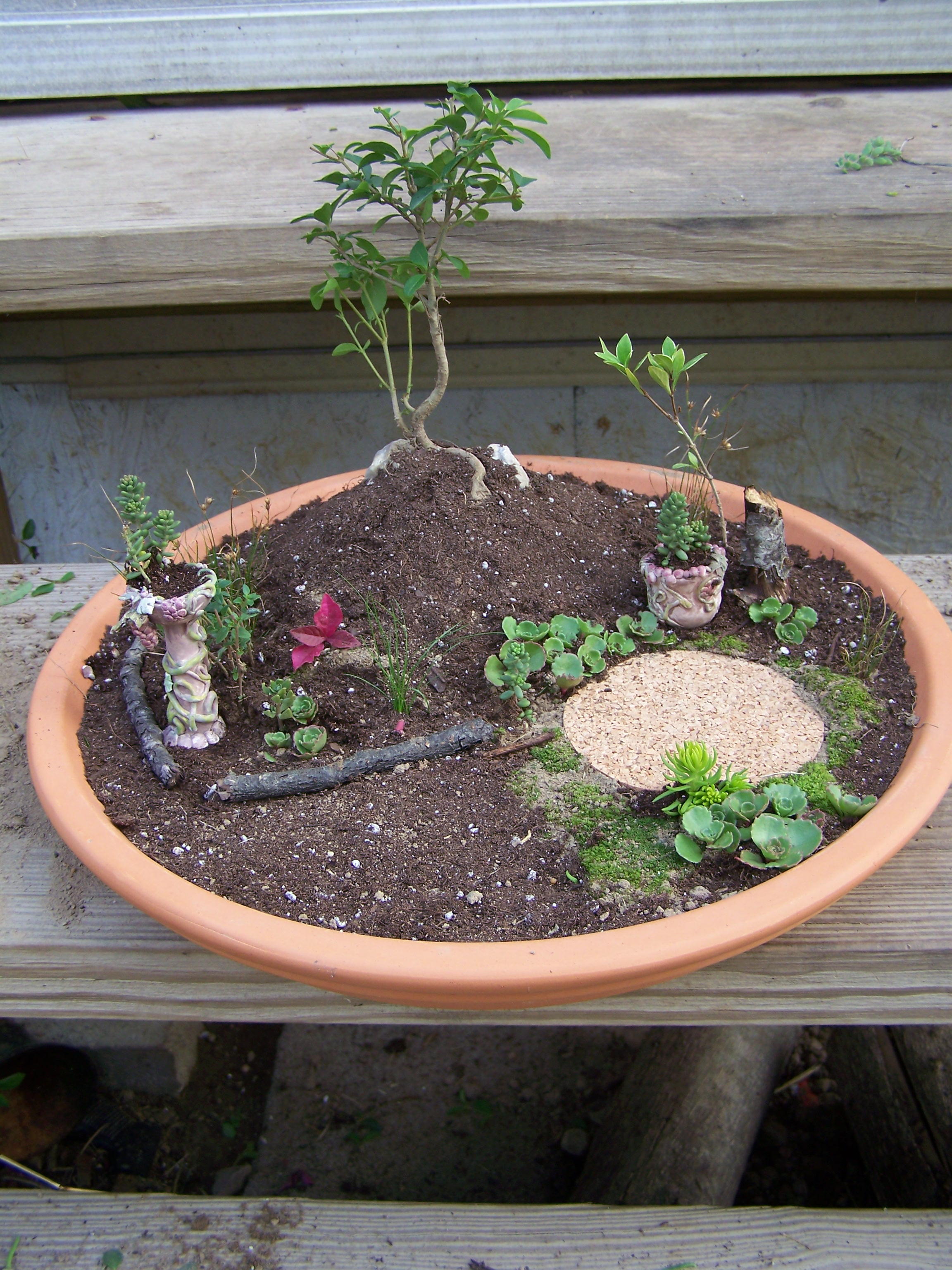 How to create a miniature fairy garden frugal gardening - How to start a mini garden ...